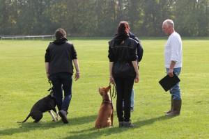 VZH , examen, hv de burght , maastricht , borgharen , puppy training, maastricht