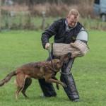 hv de burght, pakwerkexamen, hondenvereniging, africhten honden, borgharen, maastricht